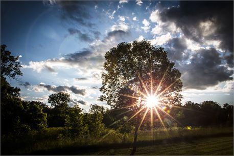 sunset through treees